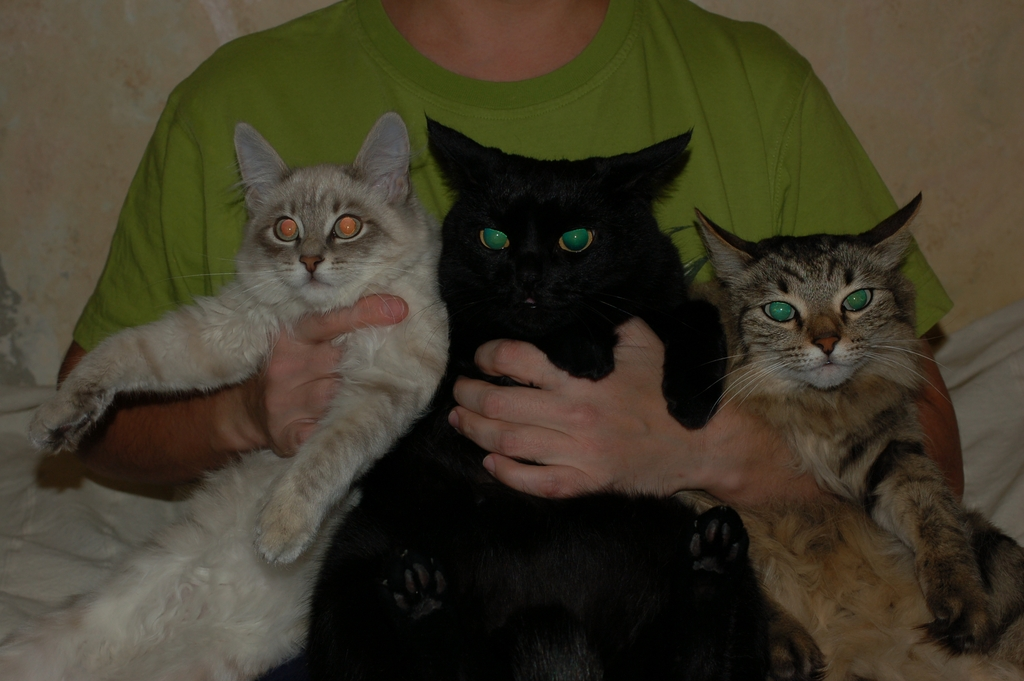 Троица: Няша, Бася, Рыся.